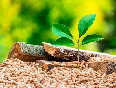Weltumwelttag 2021: Die Nachhaltigkeit der Biomasse-Heizanlage